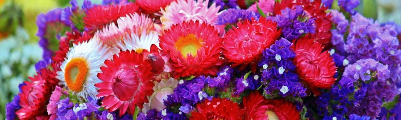 flowers-870031_1280